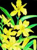 Żółte dzienne leluje Obraz Royalty Free