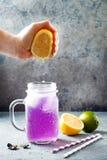 Te eller lemonad för blått för blomma för fjärilsärta med is Växt- drink för sund detox royaltyfria bilder