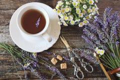 Te för lavendel för Ð- romatic, ny lavendel och lös kamomill Fotografering för Bildbyråer