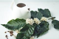 Te för teblommakaffe i glass vit bakgrund Arkivfoto