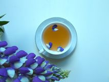 Te i en vit kopp med blåa lupine blommor, blå bakgrund arkivfoto