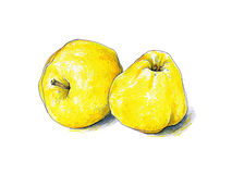 Żółte jabłko owoc odizolowywają na białym tle Koloru nakreślenia porady pióra Zdjęcie Stock