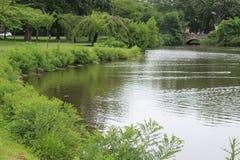 Te lake Royalty Free Stock Images