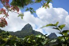 Te Manga berg i den Rarotonga kocken Islands Arkivfoto