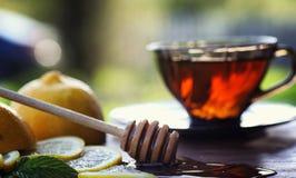 Te med citronen och mintkaramellen i natur En kopp av varmt mintkaramellte med le Royaltyfri Bild