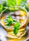 Te mint tea tea för glass växt- för horsetail för fokus för arvensekoppequisetum selektiv naturmedicin för avkok Mintkaramellblad Arkivfoto