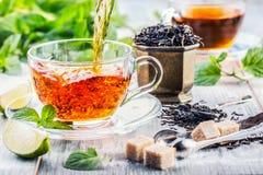 Te mint tea tea för glass växt- för horsetail för fokus för arvensekoppequisetum selektiv naturmedicin för avkok Mintkaramellblad Royaltyfria Foton