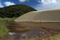 Te Paki Giant Sand Dunes. At the northern end of the 90 Mile Beach Royalty Free Stock Photos