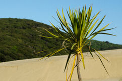 Te Paki Sand Dunes Royalty Free Stock Images