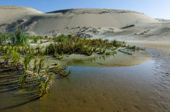 Te Paki Sand Dunes Royalty Free Stock Image