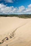 Te Paki sand dunes, New Zealand Royalty Free Stock Images