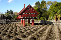 Te Parapara Maori Garden in Hamilton Gardens New Zealand Lizenzfreie Stockfotos