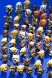Te psy są terakota barwiącym pozyci pokazem przy wiosna jarmarkami obraz stock