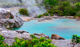 Te Puia thermal park. Rotorua town, New Zealand Royalty Free Stock Photography