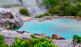 Te Puia thermal park. Rotorua town, New Zealand.  Royalty Free Stock Photography