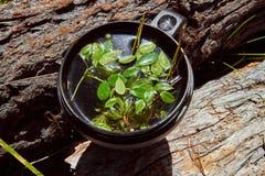Te som göras från lösa bär i en råna Medicinska örter av Altai Att att fortleva i fältvillkor Royaltyfria Foton