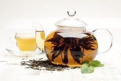 Te tea för glass växt- för horsetail för fokus för arvensekoppequisetum selektiv naturmedicin för avkok Mintkaramellblad Te i en  royaltyfri bild