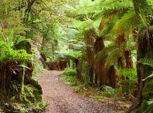 Te Urewera National Park, île du nord, Nouvelle-Zélande Images libres de droits