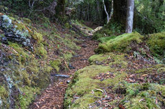 Te Urewera National Park Stock Photo
