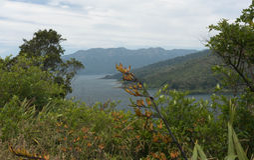 Te Urewera National Park. Lake Waikaremoana Great Walk. North Island. New Zealand Stock Photography