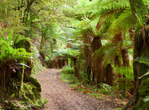 Te Urewera National Park, North Island, New Zealand Royalty Free Stock Images
