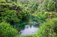 Голубая весна которая устроена на дорожке Te Waihou, Гамильтон Новая Зеландия стоковая фотография rf