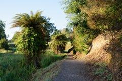 Te Waihou gångbana nära Putaruru, Nya Zeeland Royaltyfri Fotografi