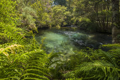 Te Waikoropupu Springs Photographie stock libre de droits