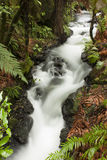Te Wairoa Stream. Near the buried village in Rotorua, New Zealand Royalty Free Stock Photography
