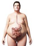Te zware mens - spijsverteringssysteem Stock Foto's