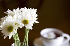Tea. White tea cup with with daises in vase Stock Photography