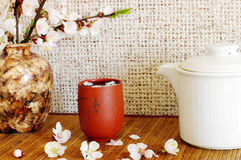 Tea with apricot flowers Stock Image