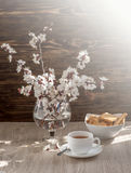 Tea and apricot flowers Royalty Free Stock Photos