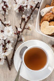 Tea and apricot flowers Stock Photography