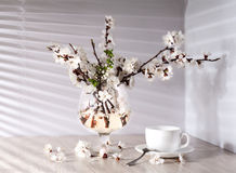 Tea and apricot flowers Stock Photos