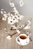 Tea and apricot flowers Stock Images