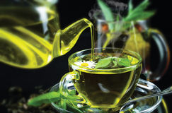 Tea. Is an aromatic beverage commonly prepared by pouring hot or boiling water over cured leaves of the Camellia sinensis, an evergreen shrub native to Asia Royalty Free Stock Photos