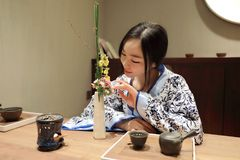 Tea art of China. A Chinese girl in blue hanfu dress is performing tea art. China has history of tea culture for more than one thousand years.Chinese tea set on Stock Photo