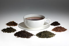 Tea assortment. Around the white cup of tea Stock Images