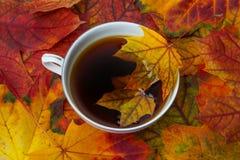 Tea and autumn foliage Stock Images