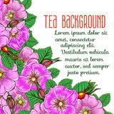Tea background Stock Photos