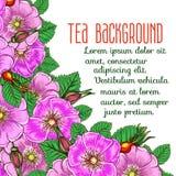 Tea background Stock Photos