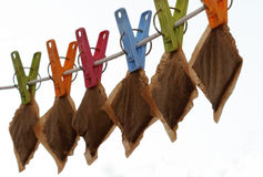 Tea bags Stock Photography