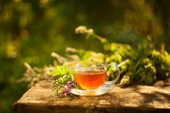 Tea in beautiful cup. Green tea in beautiful cup Stock Images