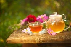 Tea in beautiful cup. Green tea in beautiful cup Royalty Free Stock Photo
