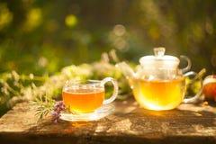 Tea in beautiful cup. Green tea in beautiful cup Stock Image