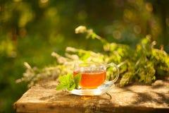Tea in beautiful cup. Green tea in beautiful cup Royalty Free Stock Photos