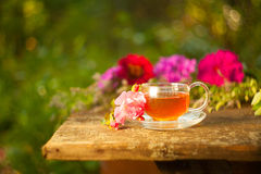 Tea in beautiful cup. Green tea in beautiful cup Royalty Free Stock Photography