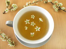 Tea with blackthorn flowers Royalty Free Stock Image