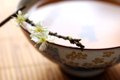 Tea and blossom plum Royalty Free Stock Photo
